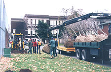 Planting trees at Gibson School