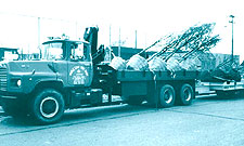 Delivery of a truck load of Trees